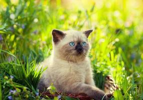 Cute kitten walking on the lawn photo