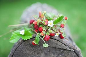 Branches of fresh wild strawberry on old wood of a log