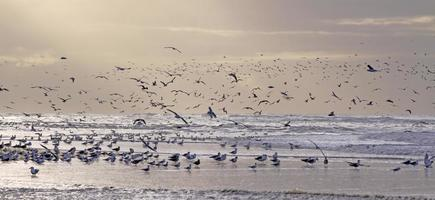 Sunset with seagulls (2)