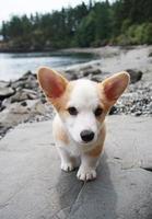 cachorro en la playa foto