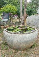 Lotus in the big jar