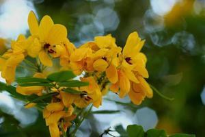 flores amarelas.