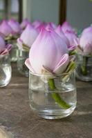 flores de lótus rosa adoram o Buda, na Tailândia