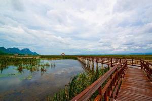 Wooden pavilion and wooden bridge in lotus lake, Samroiyod natio