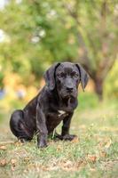 Puppy Sitting In The Grass