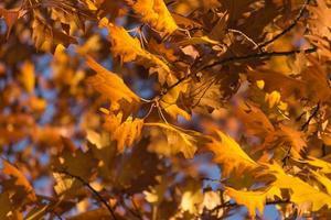 leves de otoño
