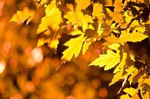 outono ouro