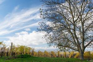 Autumn Vineyard photo
