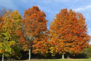 outono colorido