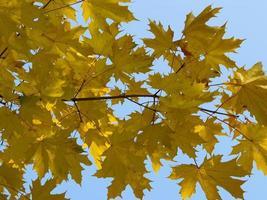 Autumn [12]