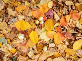 hoja de otoño.