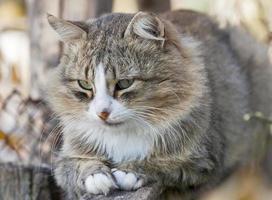 Autumn cat photo