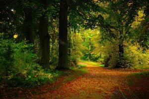 escena de otoño