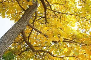 arbol de otoño
