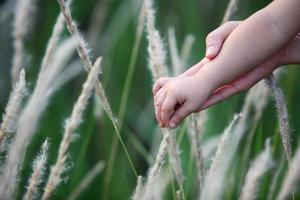 take children's hand on reeds grass.