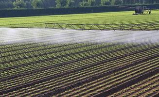 automatic irrigation system for a field of fresh salad