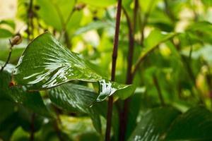 Green leaf in the rain