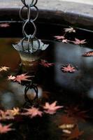 outono japonês.