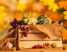 conceito de outono