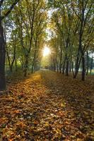 mañana de otoño. foto