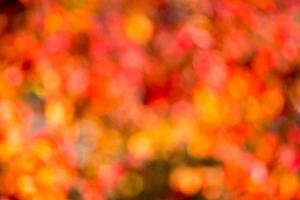 Autumn bokeh. photo