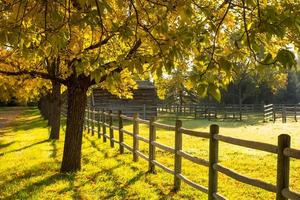árvores de outono