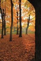 otoño colorido
