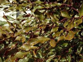 folhas com gotas 2