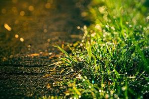 retro of grass beside the road with dewdros photo