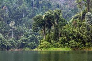 Tropical rainforest photo