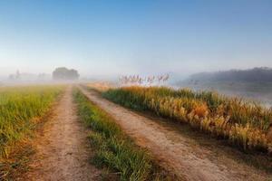 Morning near Berezino