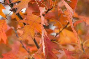 Autumn leves photo