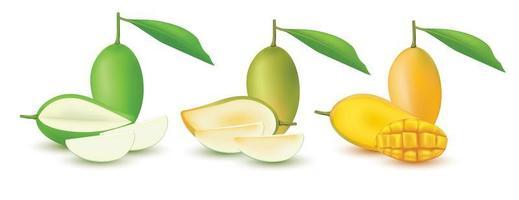 Realistic mango fruit set