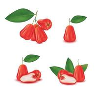 Realistic rose apple fruit set