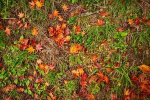 Orange and red leaves on the ground photo