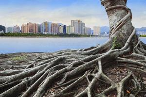 banyan tree root and urban scene background