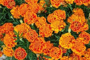 flores de color naranja brillante