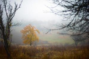 autumn trees and fog photo