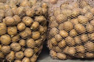 organic potatoes in the field photo
