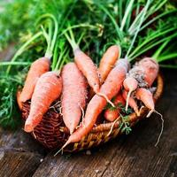 Bunch of fresh carrots with green leaves over