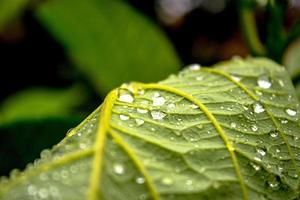 Leaf with drops photo