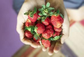 The handful of strawberries close-up. photo