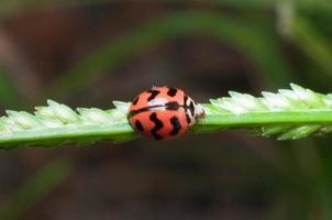 Insecto escarabajo en hoja verde foto