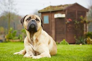perro en el jardín foto