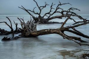 playa de madera flotante (3)