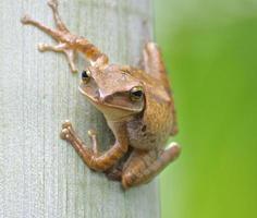 Frog resting at tree.