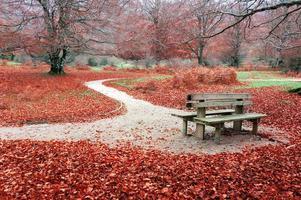 bench on autum