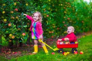 Cute kids picking apple on a farm