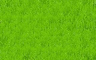 Green grass field vector