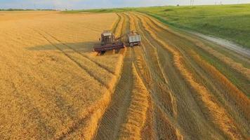 AERIAL VIEW. Combine on Harvest Field Loading Truck With Wheat. Wide Angle Shot